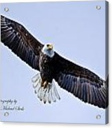Bald Eagle Acrylic Print