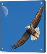Bald Eagle Soaring With The Moon Acrylic Print