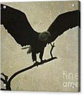 Bald Eagle Texture Acrylic Print