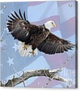 Bald Eagle Touch Of Pride Acrylic Print