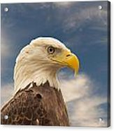 Bald Eagle With Piercing Eyes 1 Acrylic Print