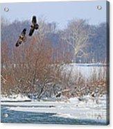 Bald Eagles At Providence Dam 1107 Acrylic Print