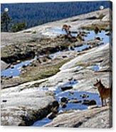 Bald Rock Lookout Acrylic Print