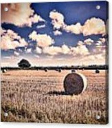 Baled Out Acrylic Print