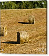 Bales In The Golden Hour Acrylic Print