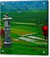 Bali And 2 Red Flowers Acrylic Print