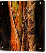 Balk Of Palm Tree Acrylic Print