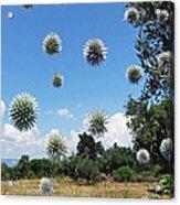 Balls Acrylic Print by Eric Kempson