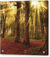 Ballyannan Wood Acrylic Print