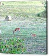 Bambi And The Twins  Acrylic Print