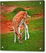 Bambi Acrylic Print