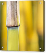 Bamboo Abstract Acrylic Print by Tim Gainey