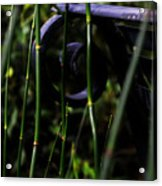 Bamboo And A Bench Acrylic Print by Tara Miller