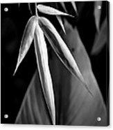 Bamboo And Banana Leaves Black And White Acrylic Print