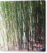 Bamboo By Roadsides Cherry Hill Roadside Greens            Acrylic Print