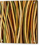 Bamboo Canes Acrylic Print