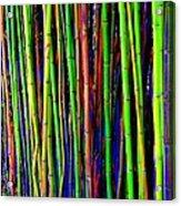 Bamboo Dream Acrylic Print