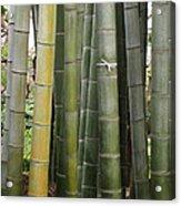 Bamboo Acrylic Print