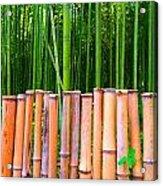 Bamboo Fence Acrylic Print by Julia Ivanovna Willhite