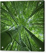 Bamboo Forest 2 Acrylic Print