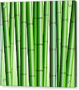 Bamboo Forest Background 2 Acrylic Print