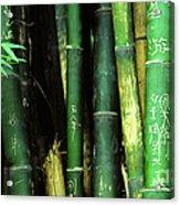 Bamboo Graffiti Pano - Sichuan Province Acrylic Print by Anna Lisa Yoder