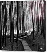 Bamboo Grove At Dusk Acrylic Print