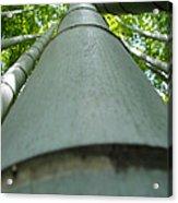 Bamboo Grove In Morning Acrylic Print