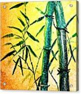 Bamboo Magic Acrylic Print