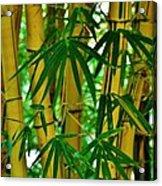 Bamboo Of Hawaii Acrylic Print