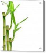 Bamboo Stems In Black Vase Acrylic Print