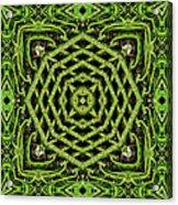 Bamboo Symmetry Acrylic Print