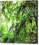 Bamboo Tree Acrylic Print
