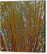 Bamboo Trees In Manuel Antonio National Preserve-costa Rica Acrylic Print