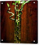 Bambooesque  Acrylic Print