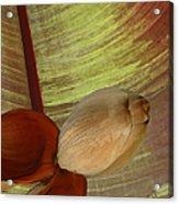 Banana Composition I Acrylic Print