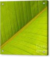 Banana Leaf Diagonal Pattern Close-up Acrylic Print by Anna Lisa Yoder