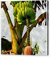 Banana Trees With Fruits And Flower In Lush Tropical Garden Acrylic Print