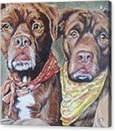 Bandana Dogs Acrylic Print by Stephanie Dunn