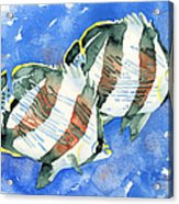 Banded Butterflyfish Acrylic Print