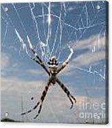Banna Spider Acrylic Print
