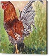 Bantam Cockerel Acrylic Print