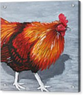 Bantam Rooster 2 Acrylic Print