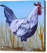 Bantam Rooster Acrylic Print