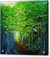 Banyan Walk Acrylic Print