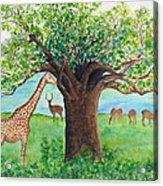 Baobab And Giraffe Acrylic Print