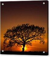 Baobab Acrylic Print