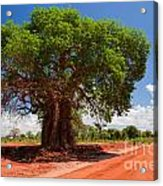 Baobab Tree On Red Soil Road Acrylic Print