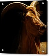 Barbary Sheep Portrait Acrylic Print by Lourry Legarde