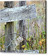 Barbed Fence Acrylic Print